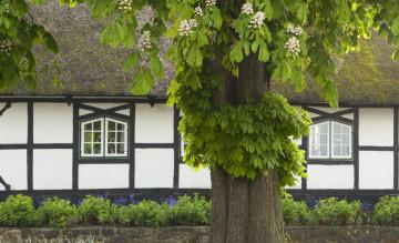 Trồng cây to trước nhà có tốt cho phong thuỷ không?