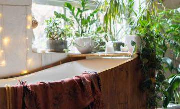 7 loại cây ưa ẩm thích hợp cho không gian phòng tắm