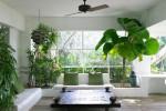 Bát quái và cách bố trí cây xanh trong nhà